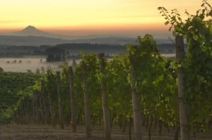 Elk Cove Vineyard Oregon wine country