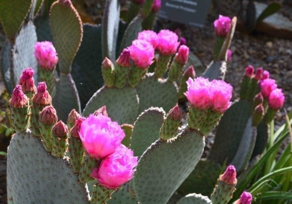The Desert Botanic Garden in Phoenix is must see.