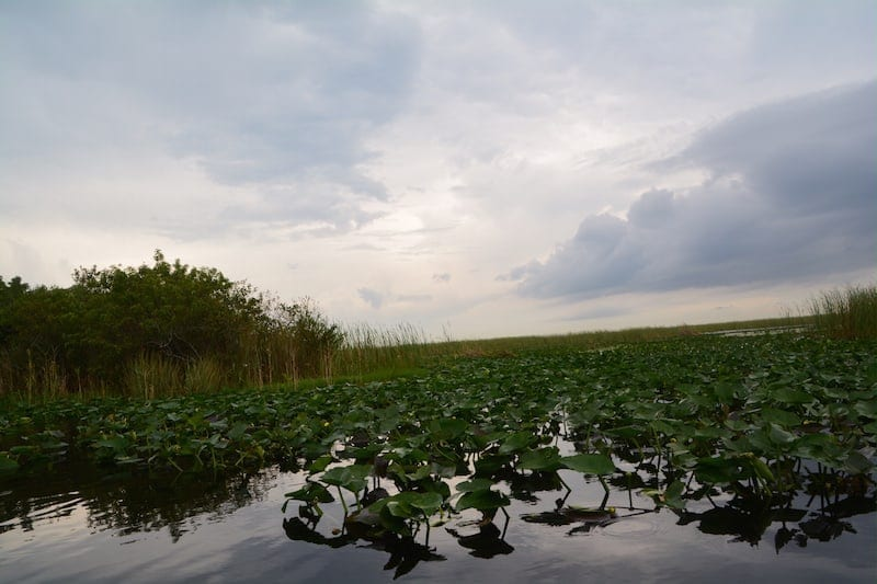 Things to do in Fort Lauderdale: Airboat rides with Everglades Holiday Park