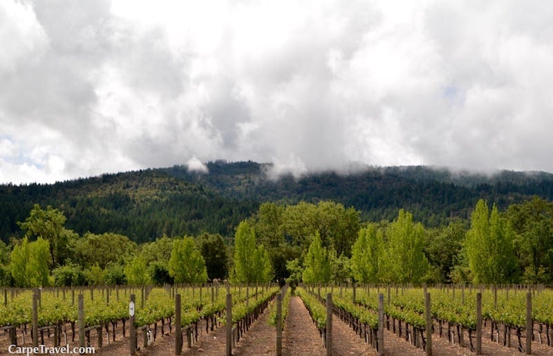 Napa Valley Wine Travel Guide