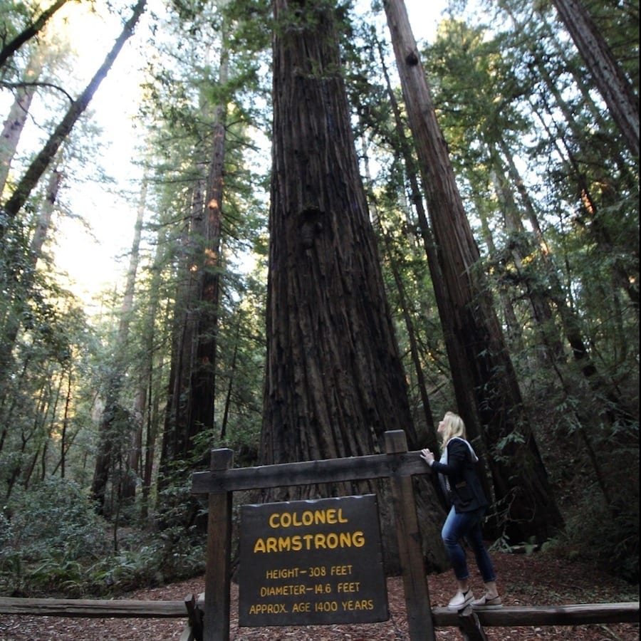 Armstrong Redwoods State Natural Reserve - Best Things to Do in Sonoma County with Tweens and Teens