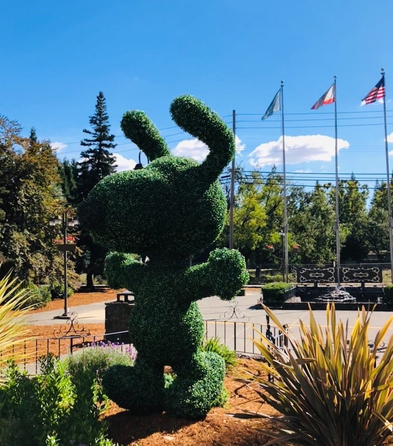 Charles M. Schulz Museum: Best Things to Do in Sonoma County with Tweens and Teens