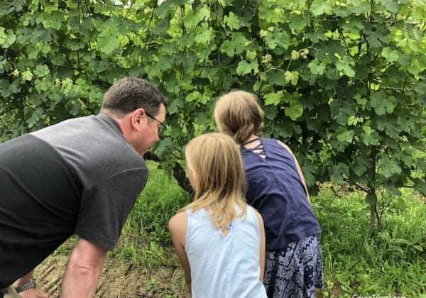 Tips for wine tasting with kids