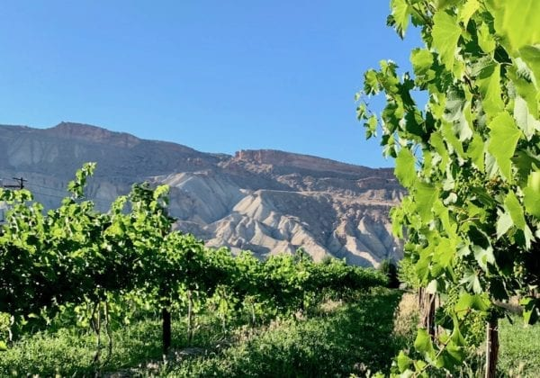 Things to do in Palisade Colorado - Maison la Belle Vie Winery