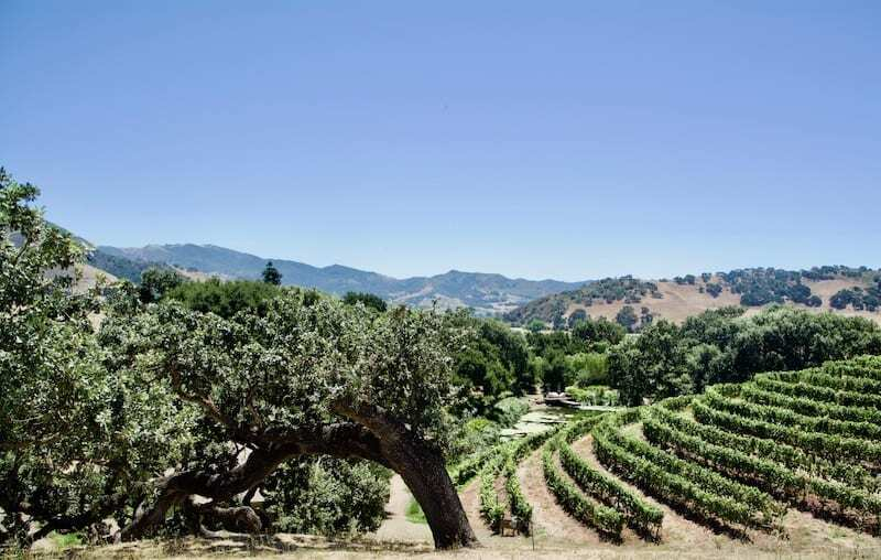 Pence Vineyards - Santa Ynez Wineries