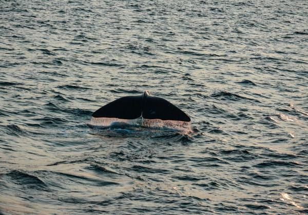 Things to do in Santa Barbara - Whale Watching