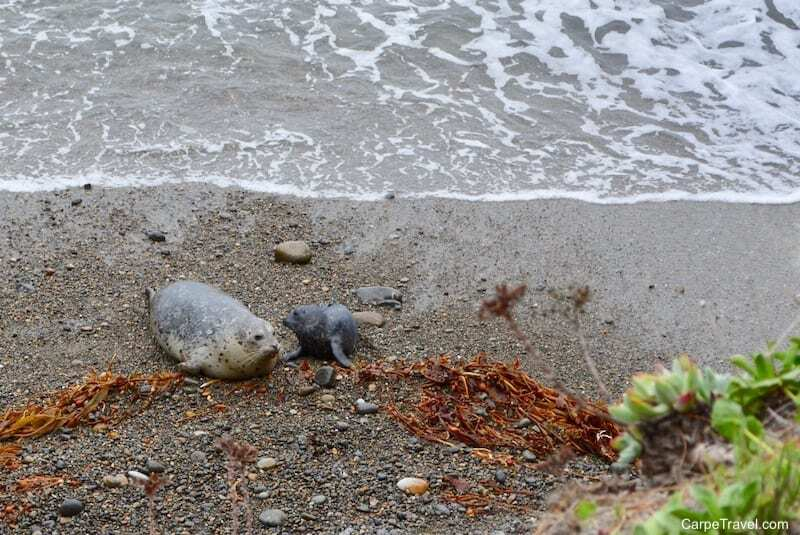 Gawking at wildlife is easy to do in Monterey