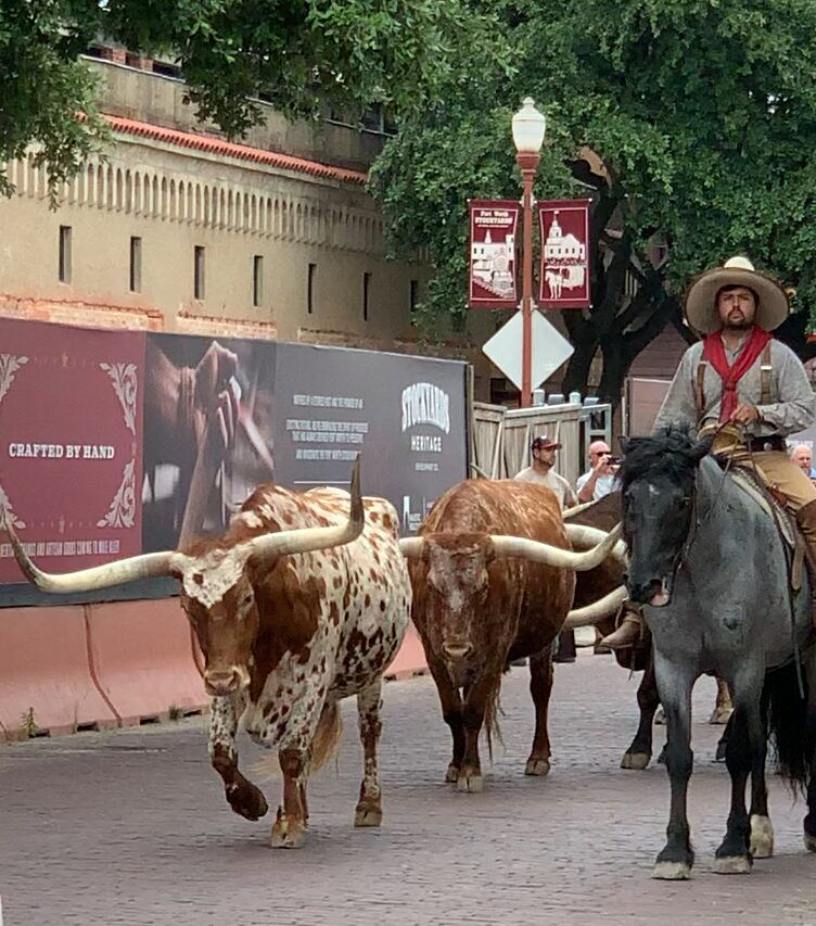Things to do in Fort Worth - Fort Worth Stockyards Cattle Drive
