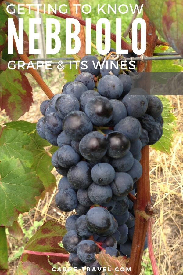 Getting to know Nebbiolo wine. Time to pour into the details about your favorite red wine grape varieties and the wines they're producing! Click over for Carpe Travels guide to understanding the wine regions producing Nebbiolo wine and the grape itself.