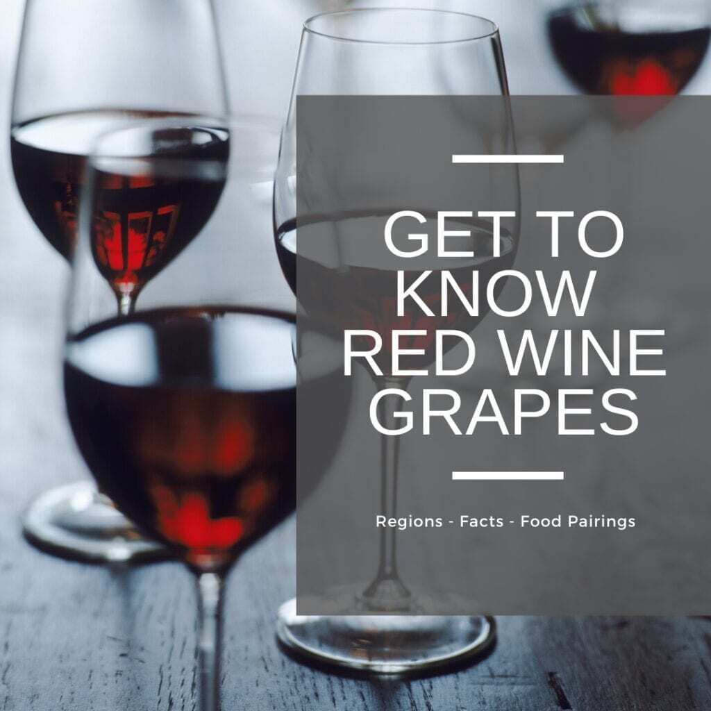get to know red wine grapes