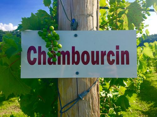 Wineries in the Poconos grow Chambourcin grapes for much of its wine production