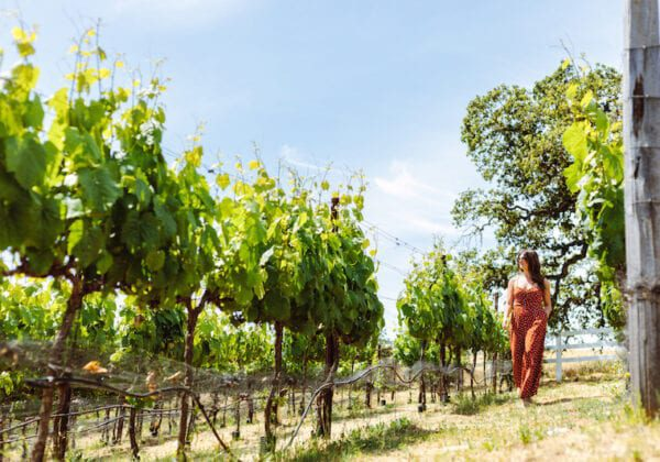 Coombsville Wineries