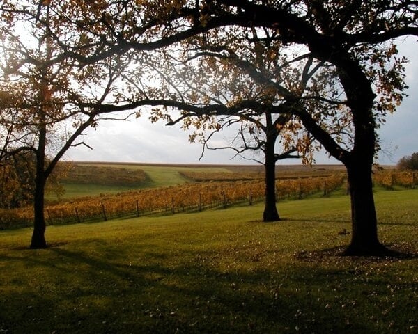 Botham Vineyards and Winery in Wisconsin Wine Country