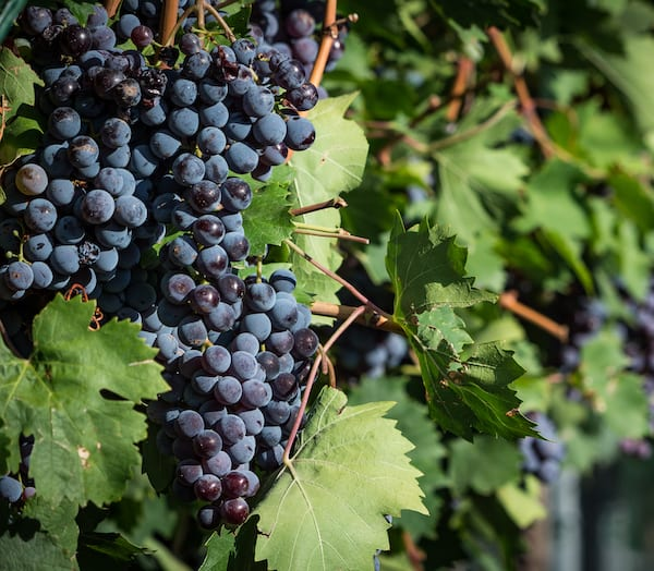 Top New Mexico Wineries to Sip