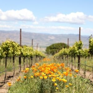 Hahn Monterey winery by Carrie Belle