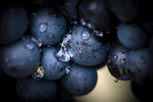 Understanding the Gamay Grape and Wines Produced
