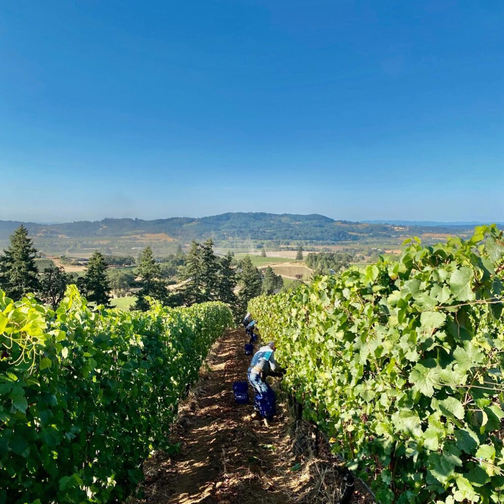 Adelsheim Vineyards is one of the Willamette Valley wineries not to miss